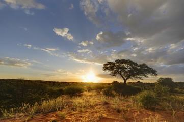 Desert Sunset, kalahari