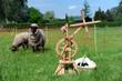 Garnherstellung aus Schafwolle