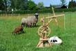 Spinnrad, Wolle, Schaf