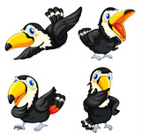 Toucan bird series