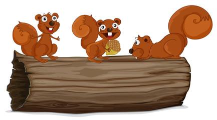 Squirrels on a log