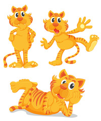 Ginger cats series