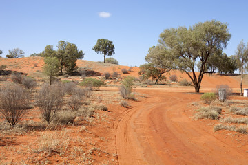 red sandy road in desert between lonly trees