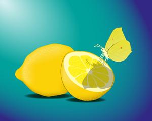 Zitronenfalter mit Zitronen