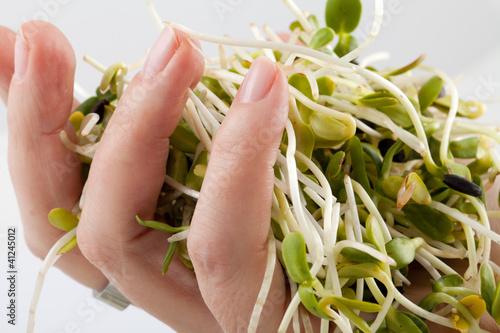 Fresh alfalfa sprouts isolated on white background
