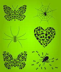 Collection of insects3