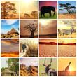Fototapeten,saeule,abenteuer,afrika,tier