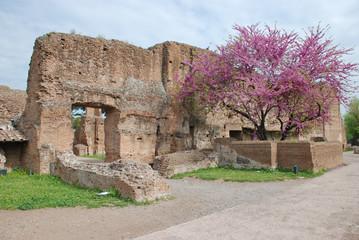 Italy. Italia Roma Palatino