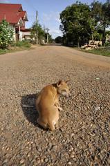 Dog Flop Road Look Gravel