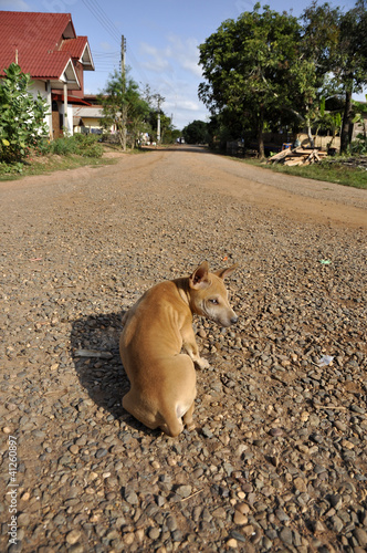 Dog Flop Road Look Gravel