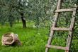 campagna italiana