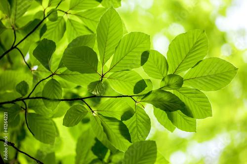 zielone-wiosenne-liscie