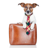 Fototapety dog with leather bag