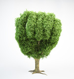 tree shaped like a human fist