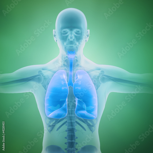 Respiratory system scientific illustration