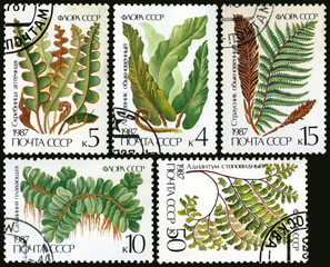 Ferns, postage stamp of the USSR