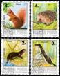 Mustela erminea, Sciurus vulgaris, Lutra, Erinaceus concolor