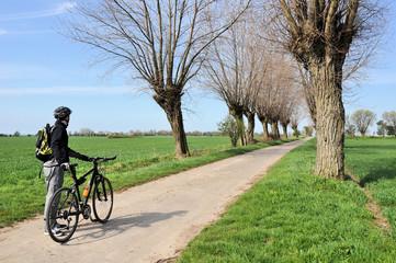 Radfahrer an der Baumallee