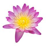Beautiful lotus isolated on white background
