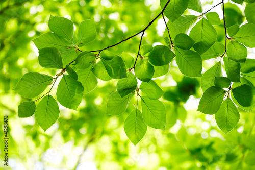 Naklejka Green leaves background
