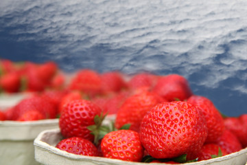 Erdbeeren zum Verkauf