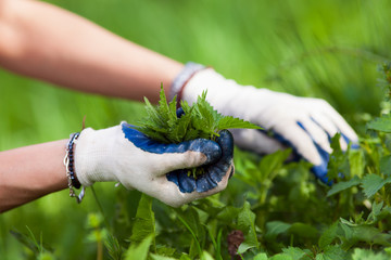 Woman picking fresh nettles