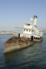 Abandoned ship with sea lions05