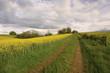 couleurs de printemps à la campagne