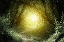 """Постер, картина, фотообои """"way in deep forest"""""""