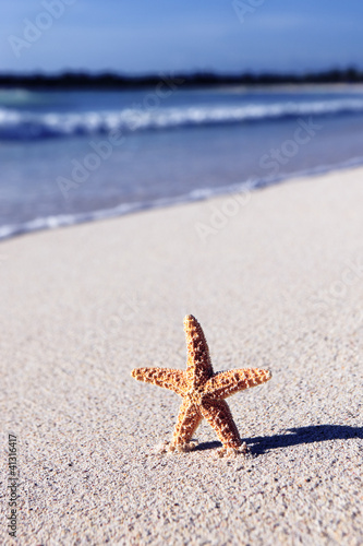caribbean sea star