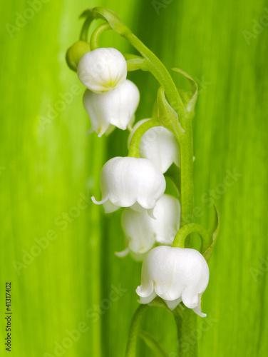 Foto op Plexiglas Lelietje van dalen Lily