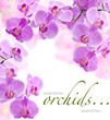 Orchid flowers (with sample text)