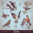 vector set: birds - vintage design elements