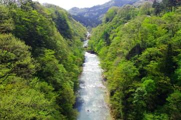 新緑の広瀬川