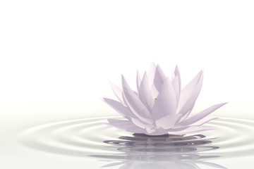 Floating waterlily