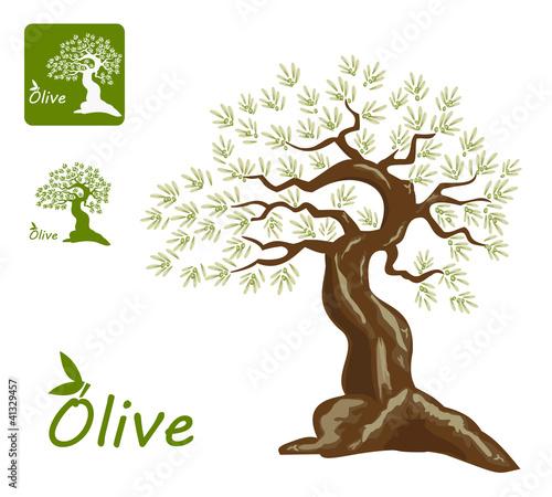 橄榄树简笔