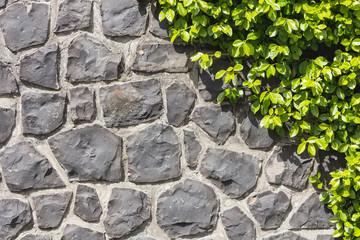 Halb Steinmauer - Halb Pflanze