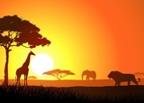 Fototapety Silhouette of lion family
