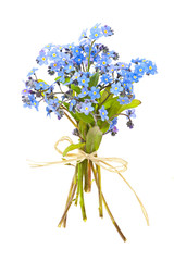 Bouquet of forget-me-nots
