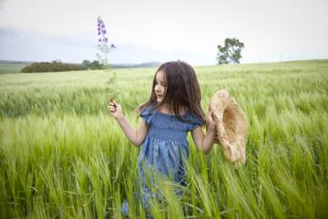on the wheath field