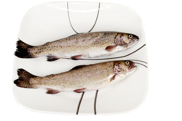 Two Fresh rainbow trout fishes