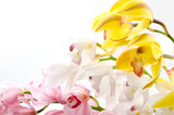 Fototapety 三色のシンビジウムの花