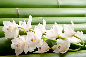 竹をバックに白いシンビジウムの花