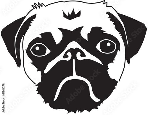 head of a pug
