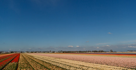 spring flower fields