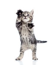 Lustig stehen spielerische Kätzchen auf weißem Hintergrund