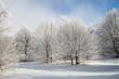 alberi neve ghiaccio cielo azzurro inverno