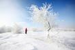 albero innevato ghiaccio cielo limpido neve inverno