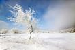 Albero innevato nella morsa del ghiaccio