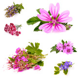 Beautiful herb with purple on white background